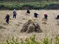 Korut Kekeringan dan Penduduknya Terancam Kelaparan