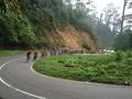 Pesepeda Internasional Menjelajah Lekuk Tanah Minang