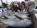 Menteri Susi Tolak Pelabuhan Sorong Jadi Pelabuhan Tuna