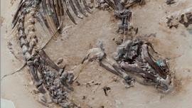 Mengapa Fosil Rambut Hewan Purba Jarang Ditemukan