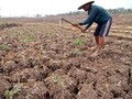 Jokowi Sindir BPN Soal Lamanya Pembuatan Sertifikat Tanah