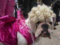 Lucunya Parade Halloween Anjing di New York