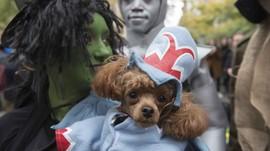 'The Wizard of Oz' Bersudut Pandang Anjing Mulai Digarap
