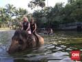 Mesra bersama Gajah Sumatra di Nirwana Ubud