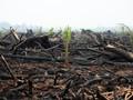 Cegah Kebakaran Lahan Gambut, BRG Optimalkan Sumur Bor