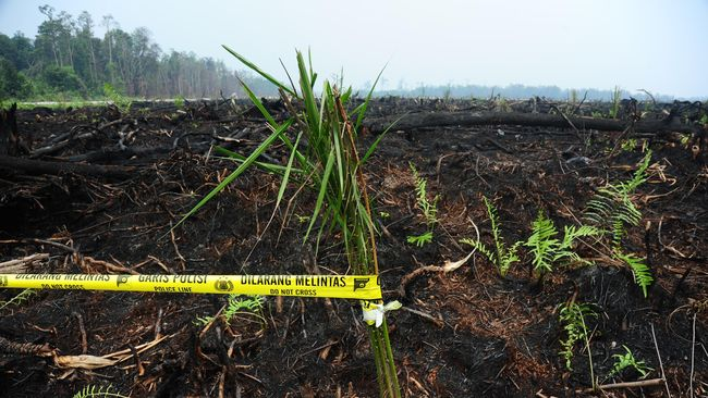 Sempat Disegel, Perusahaan Sawit 'Buldoser' Hutan di Aceh
