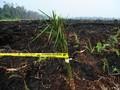 IPB: Emisi Karbon Akibat Deforestasi Turun 19 Persen