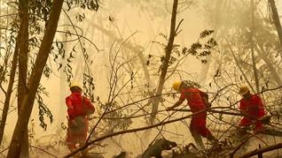 500 Ribu Ha Hutan Produksi Ditargetkan Jadi Hutan Alam 2026