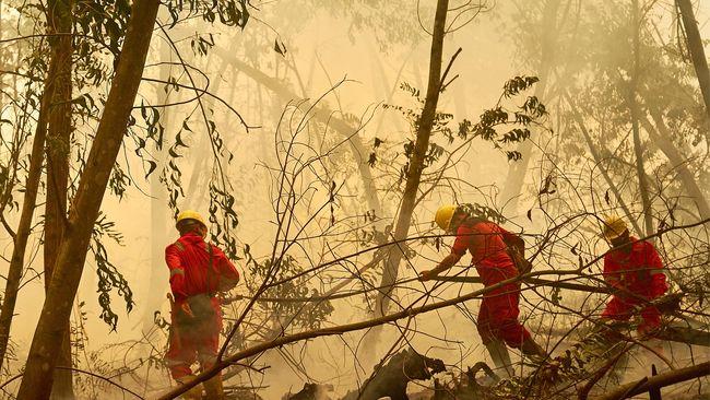 Gugatan Atas Perusahaan Pembakar Hutan Rugikan Ekonomi RI