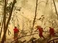 Bos Perusahaan Ditetapkan Tersangka Pembakar Hutan