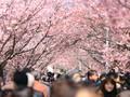 'Senjata' Rahasia Jepang Demi Pikat Turis Indonesia