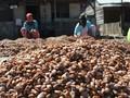 Menteri Darmin Kaji Usulan Tarif Bea Keluar Biji Kakao