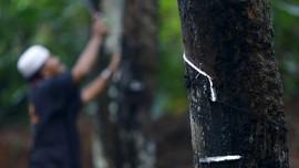 Harga Anjlok, Pemerintah Beli Karet Petani untuk Aspal Jalan