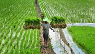 Kementan Klaim UU Budidaya Pertanian Berpihak ke Petani