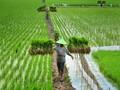 Sensor Pertanian Karya Startup Lokal Diminati Internasional