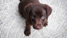 Seekor Anjing Mati Setelah Dipaksa Masuk Bagasi Kabin Pesawat