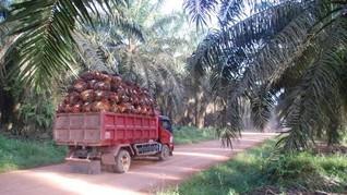 Lima Konglomerat Sawit Terima 76,87 Persen Subsidi Biodiesel