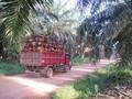 RSPO Nilai Boikot Uni Eropa Momentum Perbaikan Industri Sawit