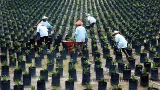 KPK Tantang Bos Pajak Pungut Rp40 T dari Sektor Kelapa Sawit