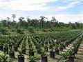 Sampoerna Agro Berkomitmen Bina Desa Siaga Api