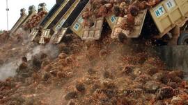 Tekan Impor BBM US$9 M, Pemkab Muba Bangun Pabrik CPO