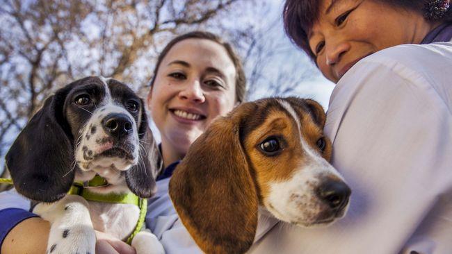 Cara Anjing Mendeteksi si Pembohong