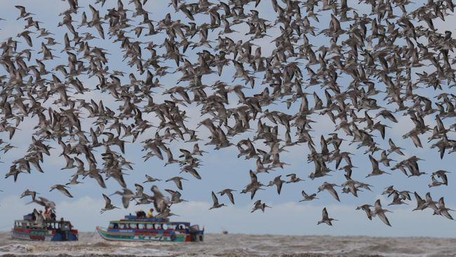 Migrasi Burung di TN Berbak dan Sembilang
