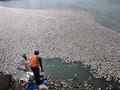 Fenomena Misterius Ratusan Ikan Mati di Perairan Maluku Utara