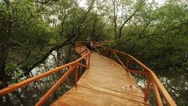 Lewat Field Trip, Ajak Anak Usia Dini Cintai Hutan Bakau