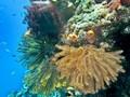 Pemerintah Kaji Asuransikan Kekayaan Laut Indonesia