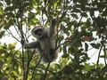 Menjadi Taman Wisata Alam, Kawasan Hutan Kamojang akan Ditata