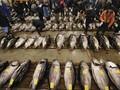 Pemkab Simeulue Aceh Mulai Bidik Pasar Ikan China