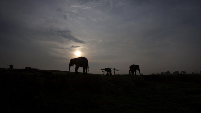 Festival Way Kambas 2016 Dibuka di Pusat Konservasi Gajah