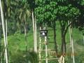 Militer Filipina Tewaskan 42 Militan Terkait ISIS
