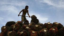 Indonesia Minta India Tak 'Anak Tirikan' Minyak Sawit RI