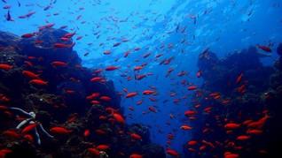 Melihat Kekayaan Laut Indonesia di Buku The State of the Sea