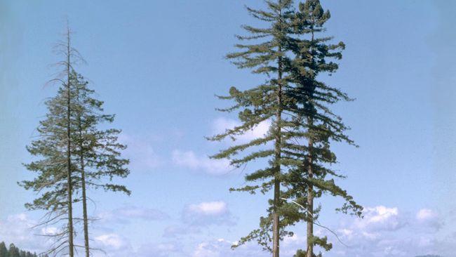 4.000 Orang Teken Petisi Agar KLHK Lindungi Lagi Pohon Ulin