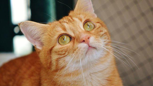 Kisah Wanita Norwegia 'Jelmaan' Kucing