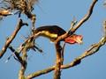 Tempat untuk Melihat Burung Endemik di Indonesia