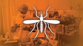 Mengenal Lebih Dalam Virus Zika