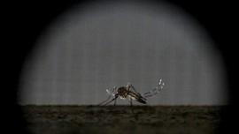 Kenali dan Hindari Gigitan Nyamuk Demam Berdarah