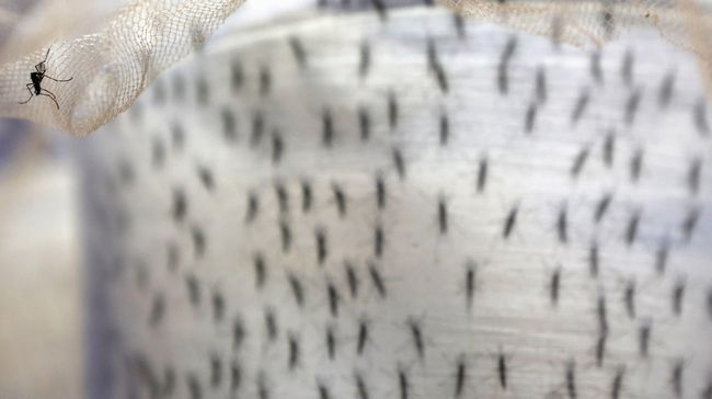 Riset Temukan Jamur Ampuh Basmi Nyamuk Malaria