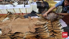 Polisi Ringkus Penjual Kulit Harimau Sumatra di Langkat