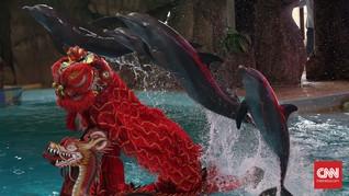 Agen Wisata Mulai Setop Jual Tiket Atraksi Lumba-lumba