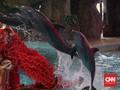 Soal Lumba-lumba di Sriwijaya Air, TIJA Akui Taat Aturan