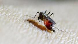 Waspada Kaki Gajah yang Ditularkan oleh Semua Jenis Nyamuk