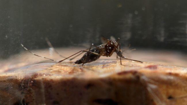 Waspada Parasit Malaria Kebal Obat yang Hampiri Asia Tenggara