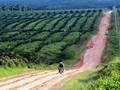 Konflik di Mesuji, Polisi Minta Sikap Pengelola Hutan Lindung