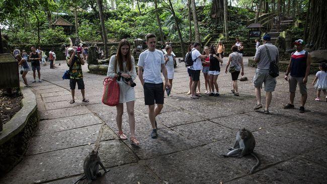 Ketika Monyet Tak Lagi Menggemaskan