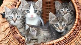 Alasan Ilmiah Mengapa Manusia Mudah Gemas pada Kucing